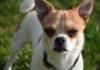 Pes je mistr smyslů. Zrak, sluch, čich i chuť má extrémně vyvinutou.