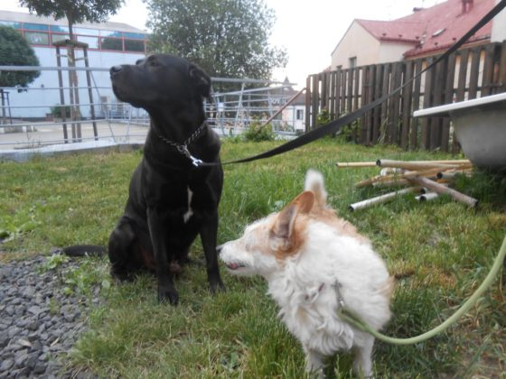 Aron a psí kamarádka Mája